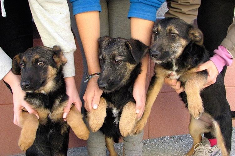 El Parque del Oeste acogerá este sábado una fiesta de apoyo a la tenencia responsable de perros y a la adopción