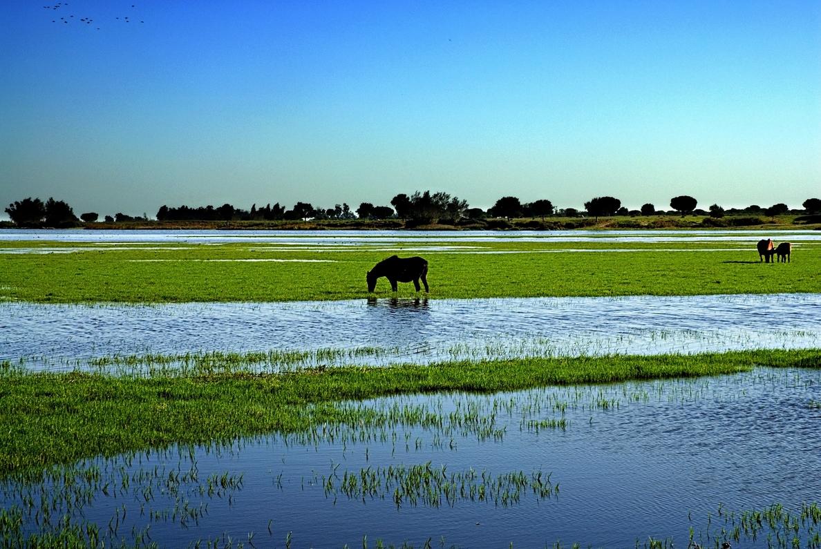Fiscal anuncia que la ampliación de Doñana en más de 10.000 hectáreas culminará antes del 12 de octubre