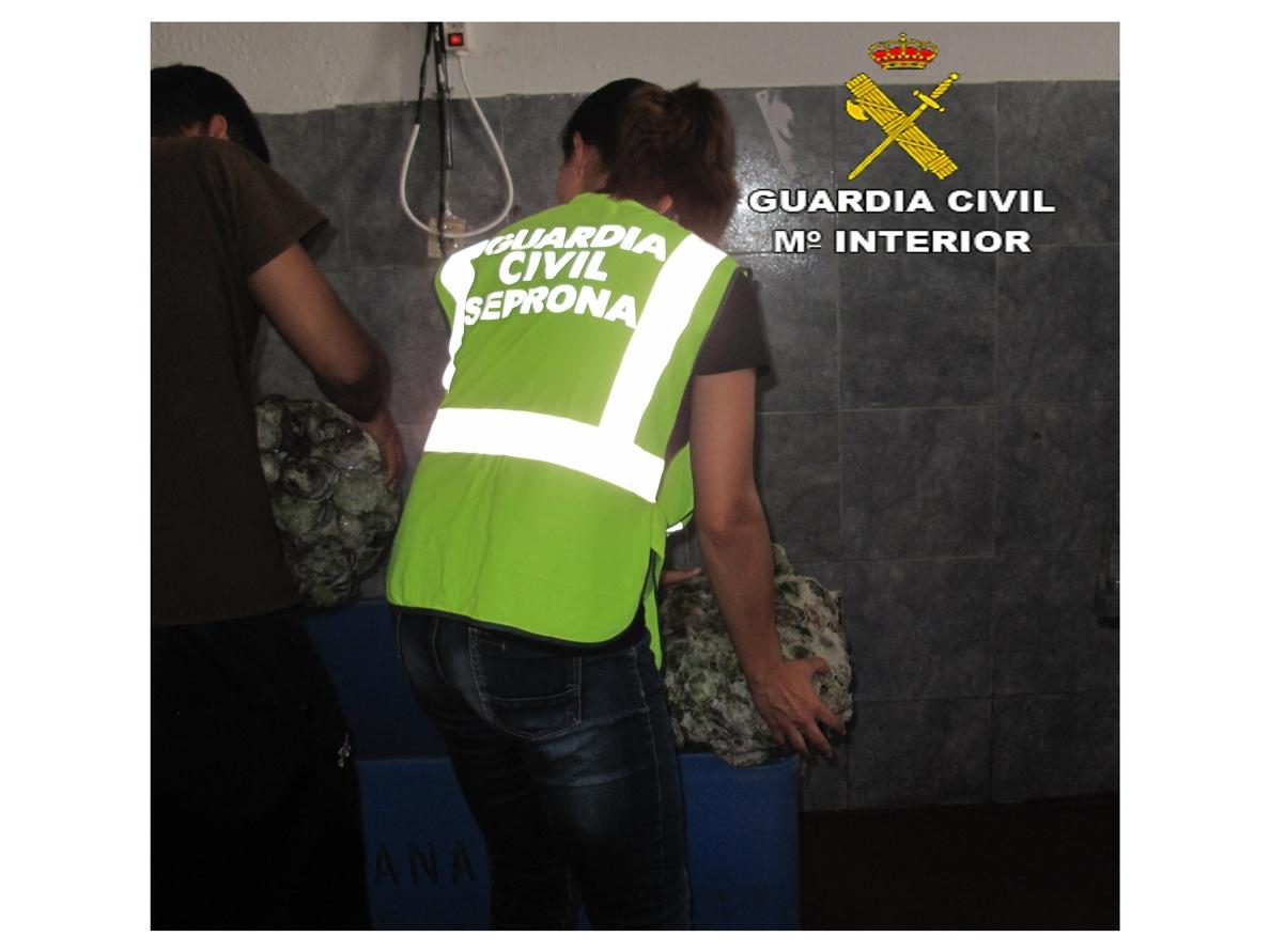 La Guardia Civil desmantela un almacén clandestino de venta de pescado en Lanzarote