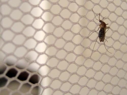 Químicos desarrollan un nuevo fármaco para combatir la malaria