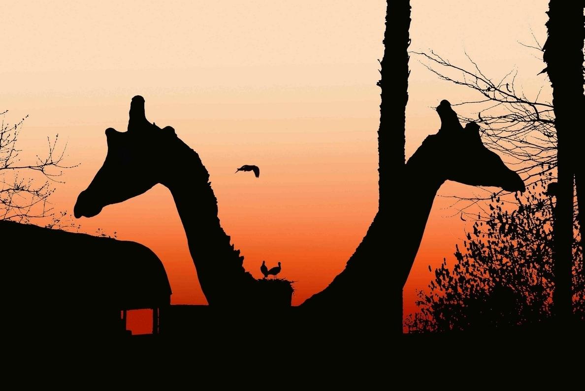 El Zoo abre hasta el anochecer desde este jueves y hasta el 15 de agosto