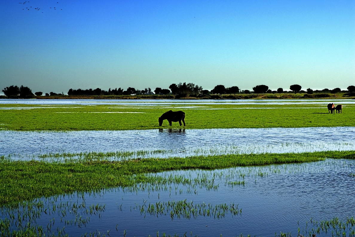 La ampliación de Doñana en más de 10.000 hectáreas culminará antes del 12 de octubre