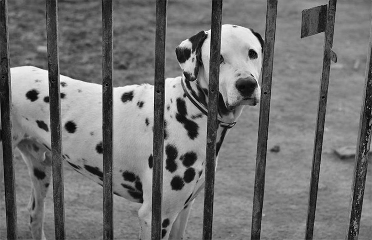 La protectora de animales »Scooby» organiza una campaña de sensibilización sobre adopción desde este viernes en Palencia