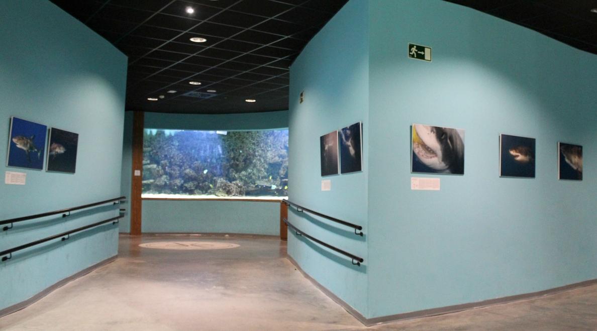 «Multa coercitiva» de 600 euros por veladores «sin licencia» en el acuario