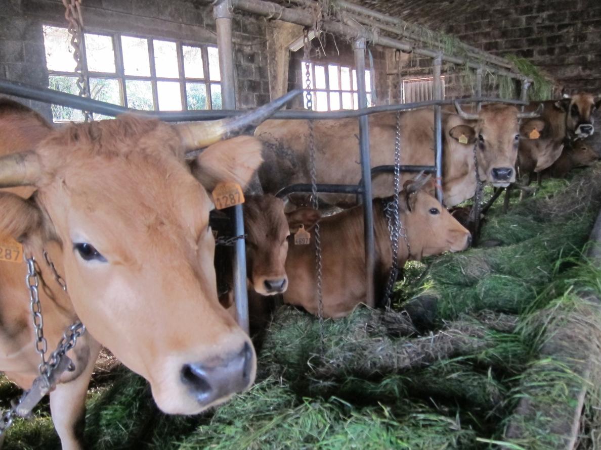 La Xunta dice que «no hay ninguna explotación láctea» sin recoger, pero admite que algunas con precios «bajos»