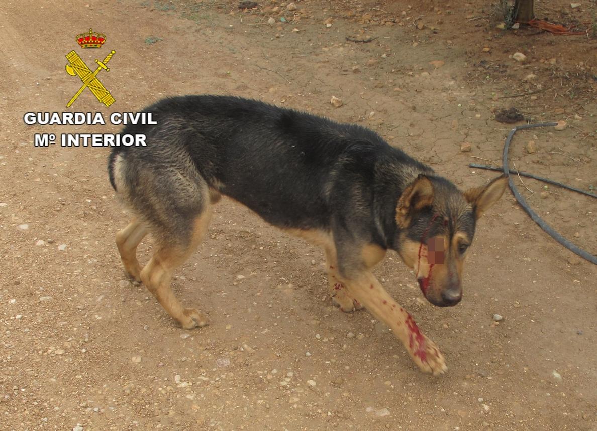 Detenido por disparar a su perro en la mandíbula y en el ojo en Barrax (Albacete)