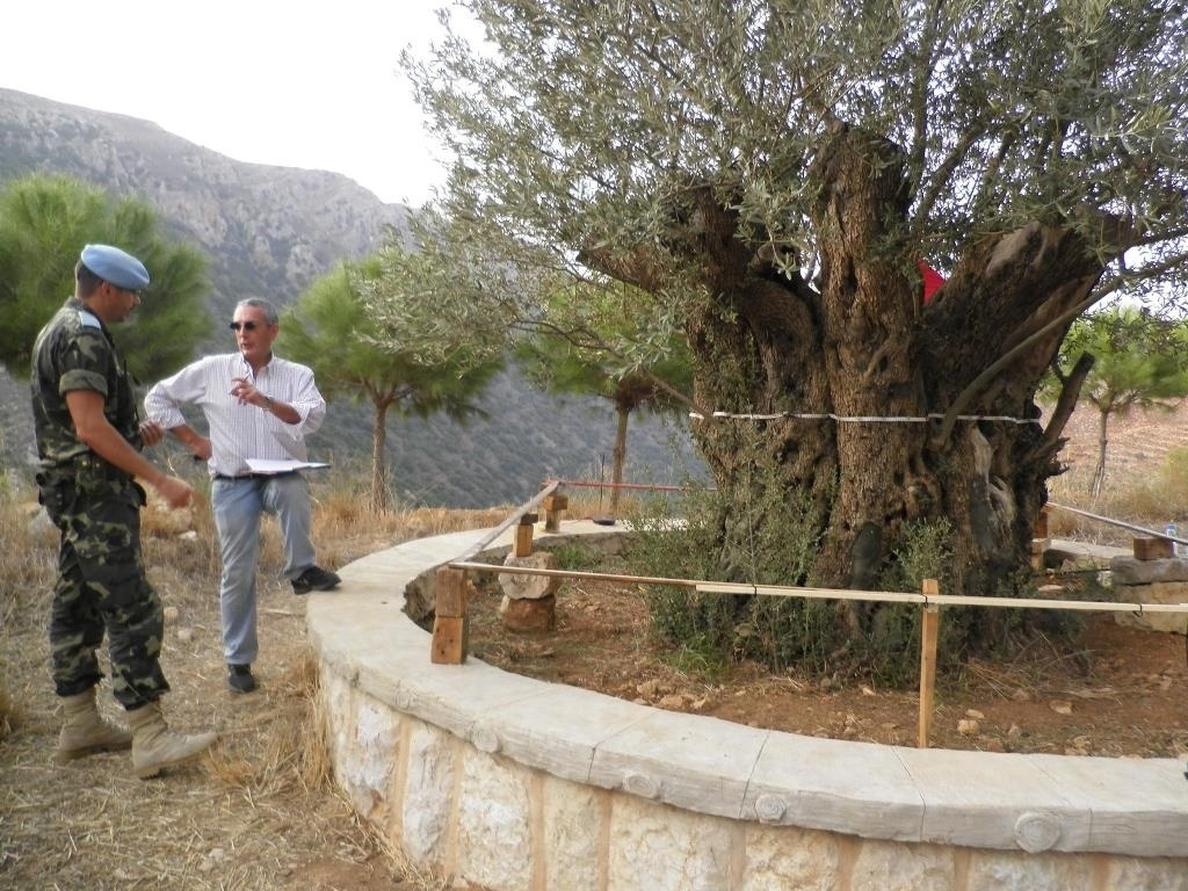 Un equipo español busca el olivo más longevo de Líbano