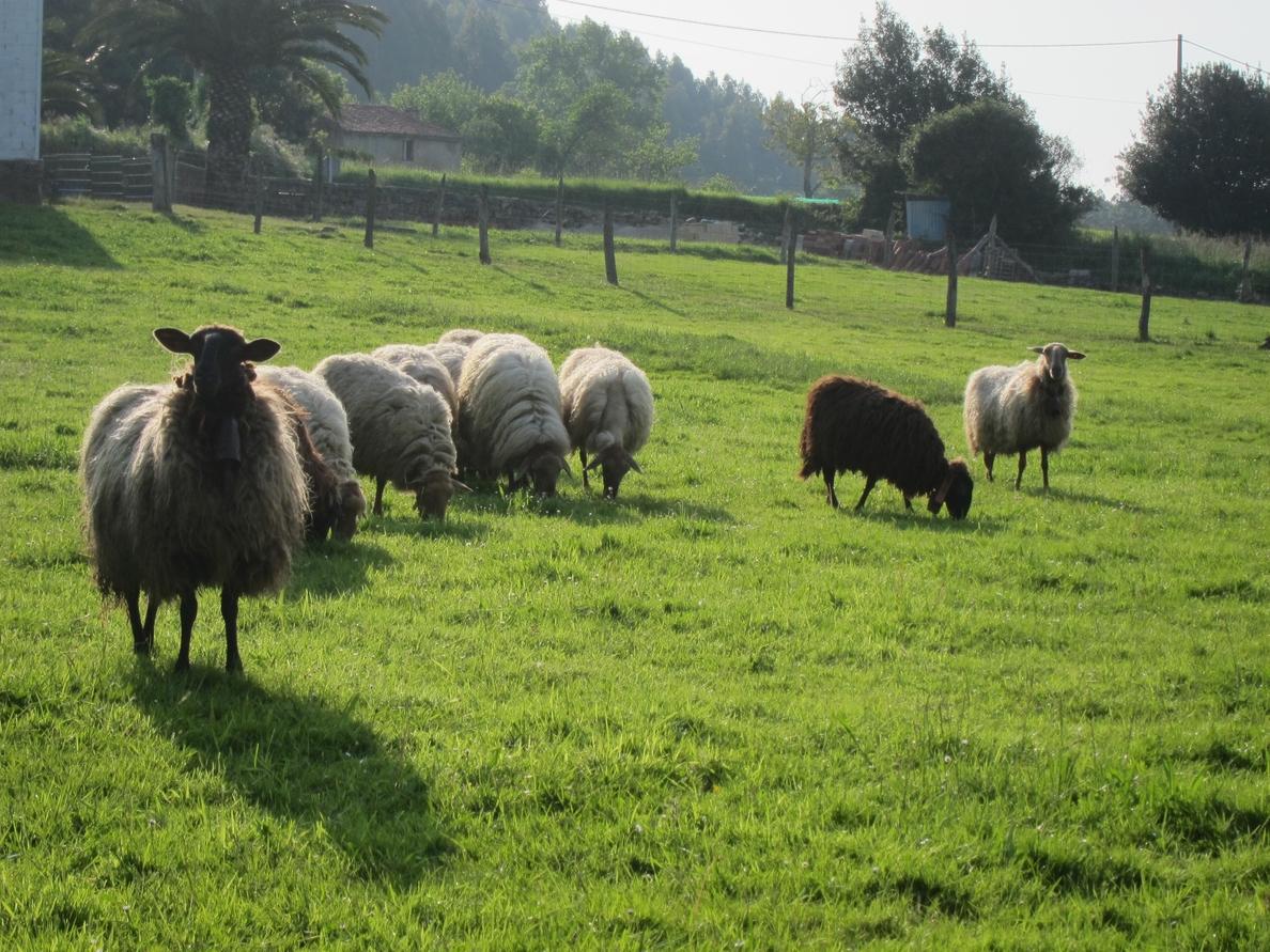 El SEPRONA imputa a una persona por el hurto de 249 ovejas en un paraje de Malón