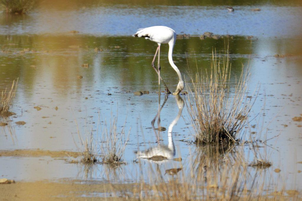 Red Natura 2000, 25 años como referente mundial de conservación