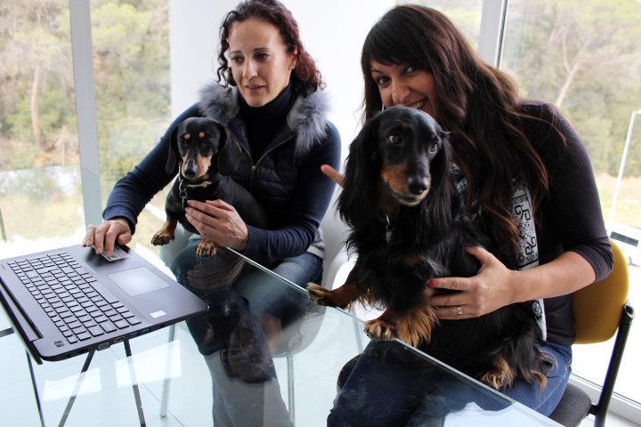 ¿Por qué las empresas deberían permitir mascotas en la oficina?