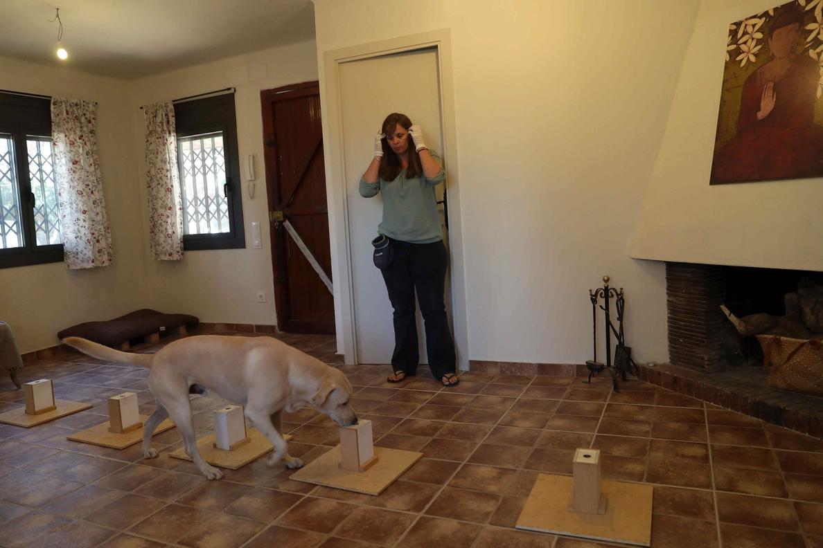 Blat, el perro capaz de detectar el cáncer de pulmón con solo oler el aliento