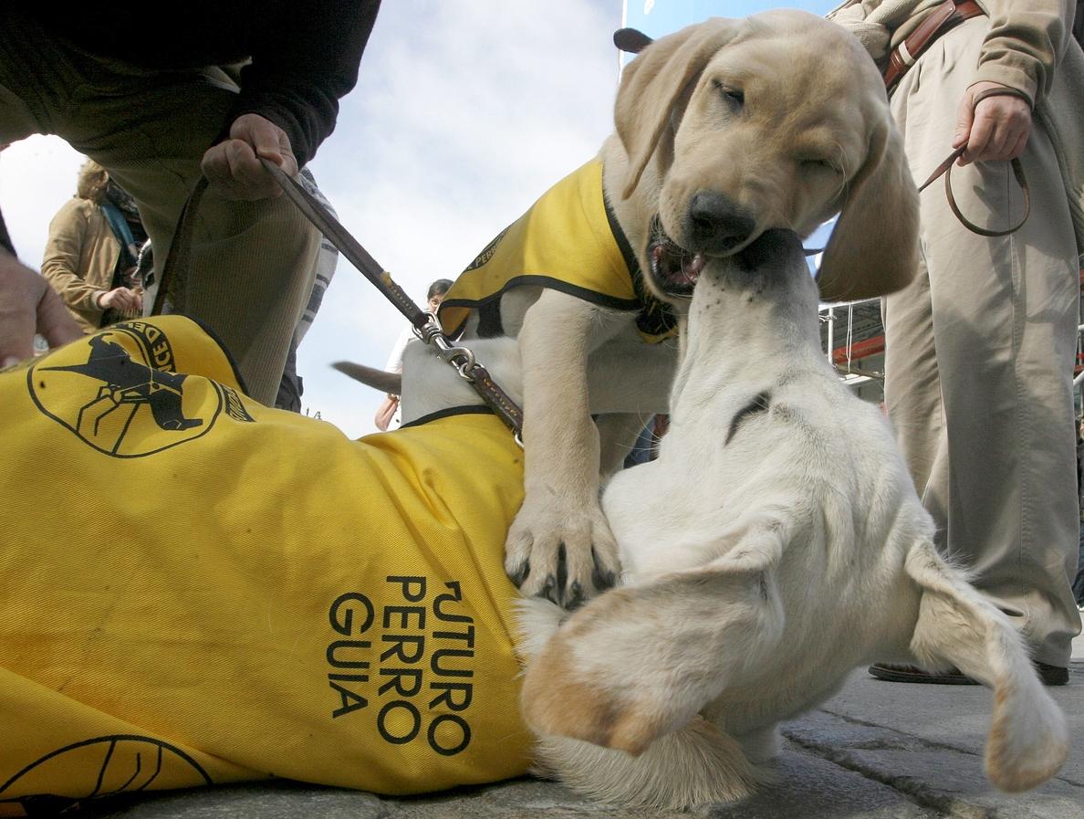 Un paso más en la accesibilidad: perros guía sueltos en las playas en España