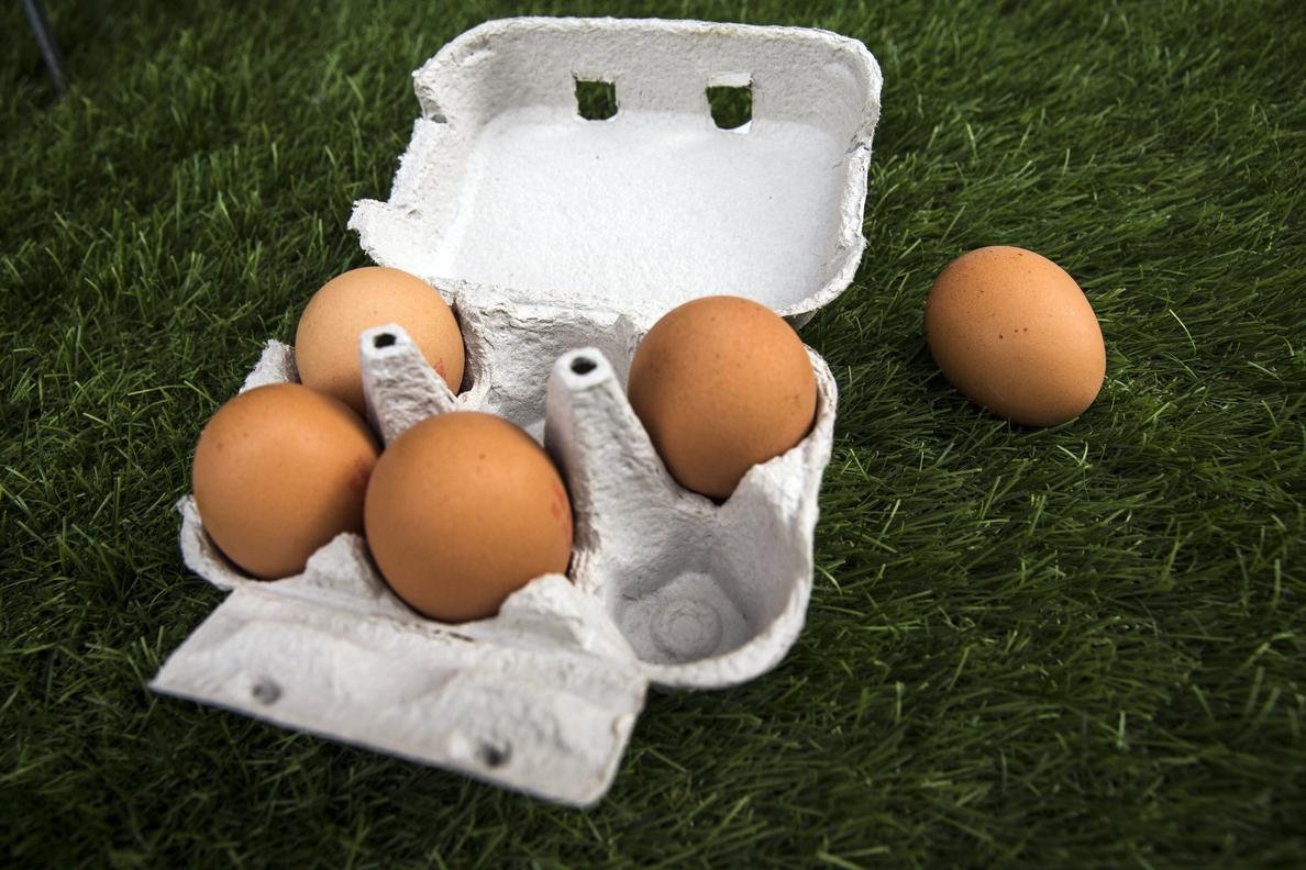 Corea del Sur detecta huevos contaminados con fipronil producidos en el país