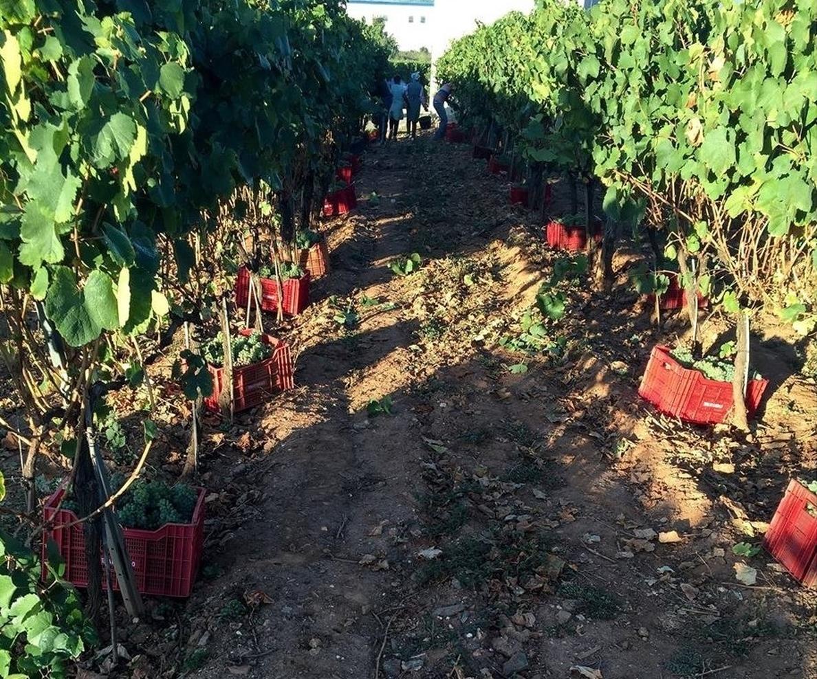 Unión de Uniones pide a la Aica que intervenga para asegurar el derecho del viticultor a contrato y precio