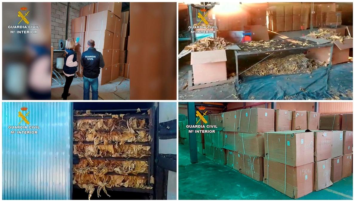 Decomiso de 250 toneladas de hoja de tabaco en Extremadura, el mayor de Europa