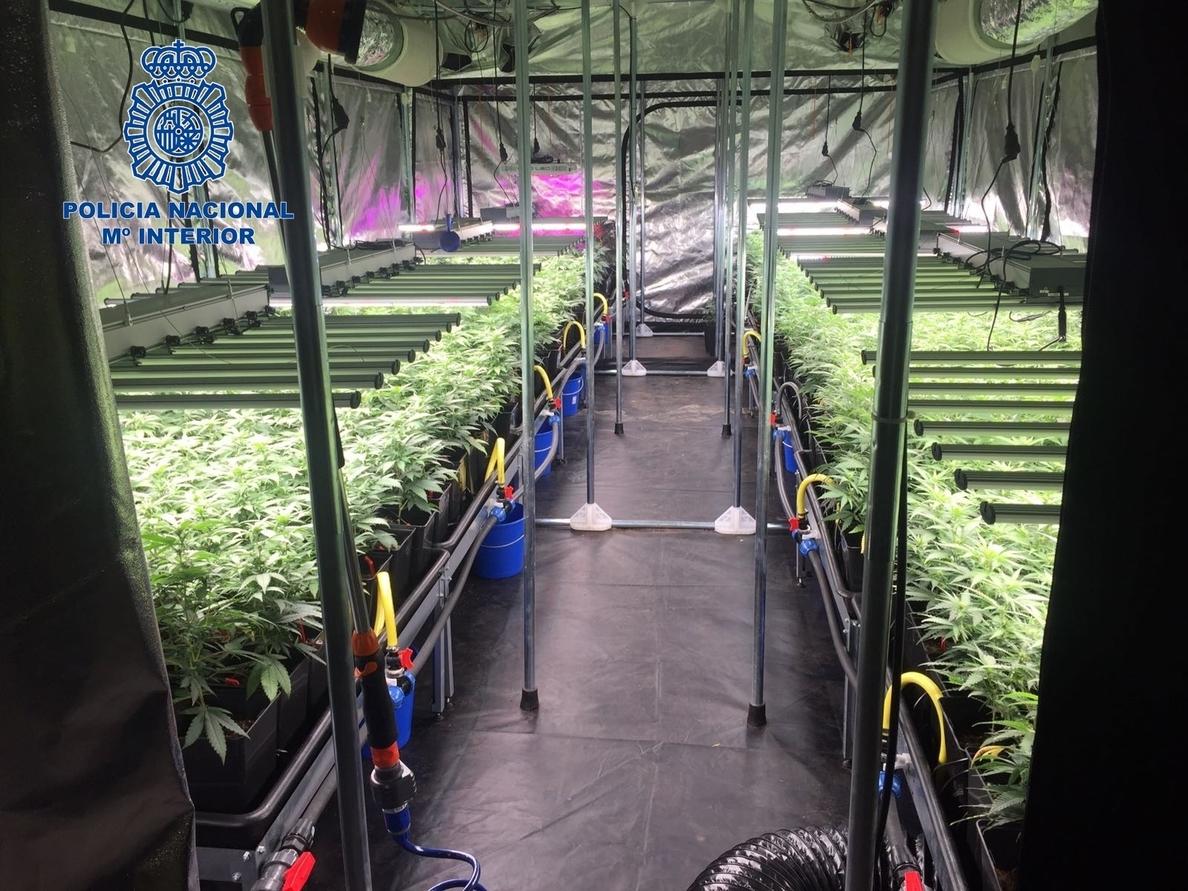 Detenidos 11 traficantes en Stuttgart y Barcelona con más de 600 plantas de marihuana