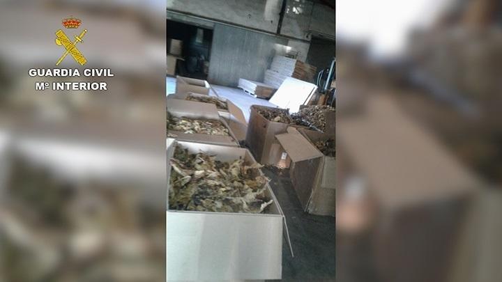 La Guardia Civil realiza en Cáceres la «mayor aprehensión de hojas de tabaco de Europa», de 250 toneladas