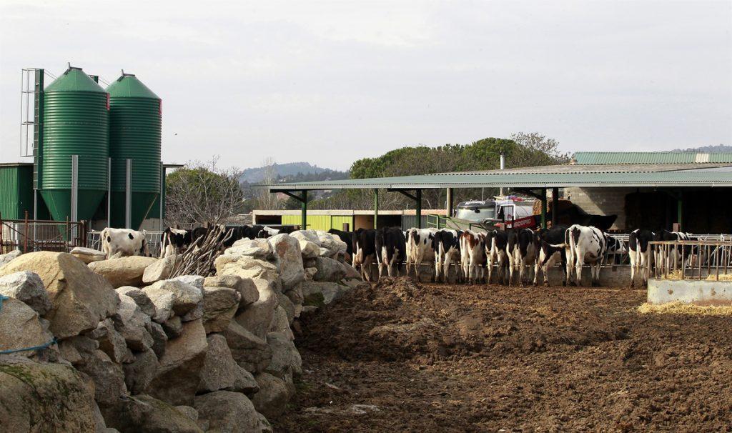 Galicia, la comunidad en la que más creció el precio de la leche en los dos últimos años, un 11,5%