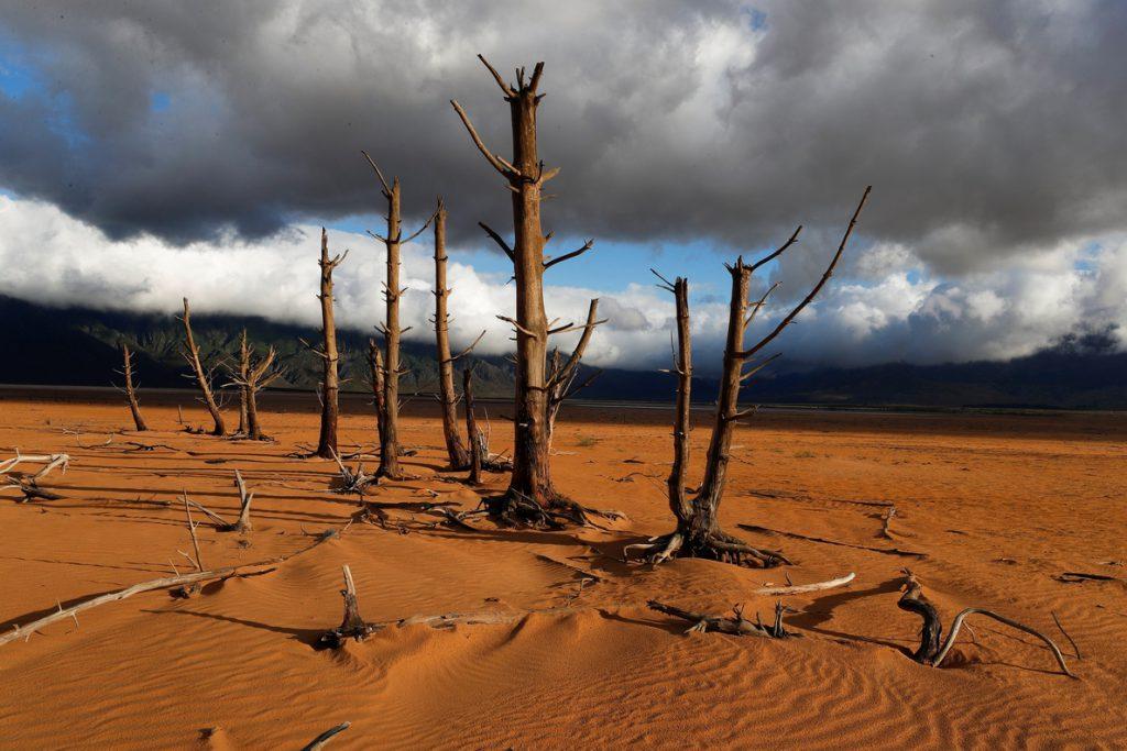 La ONU: Millones de personas en riesgo de hambruna por la sequía en el sur de África