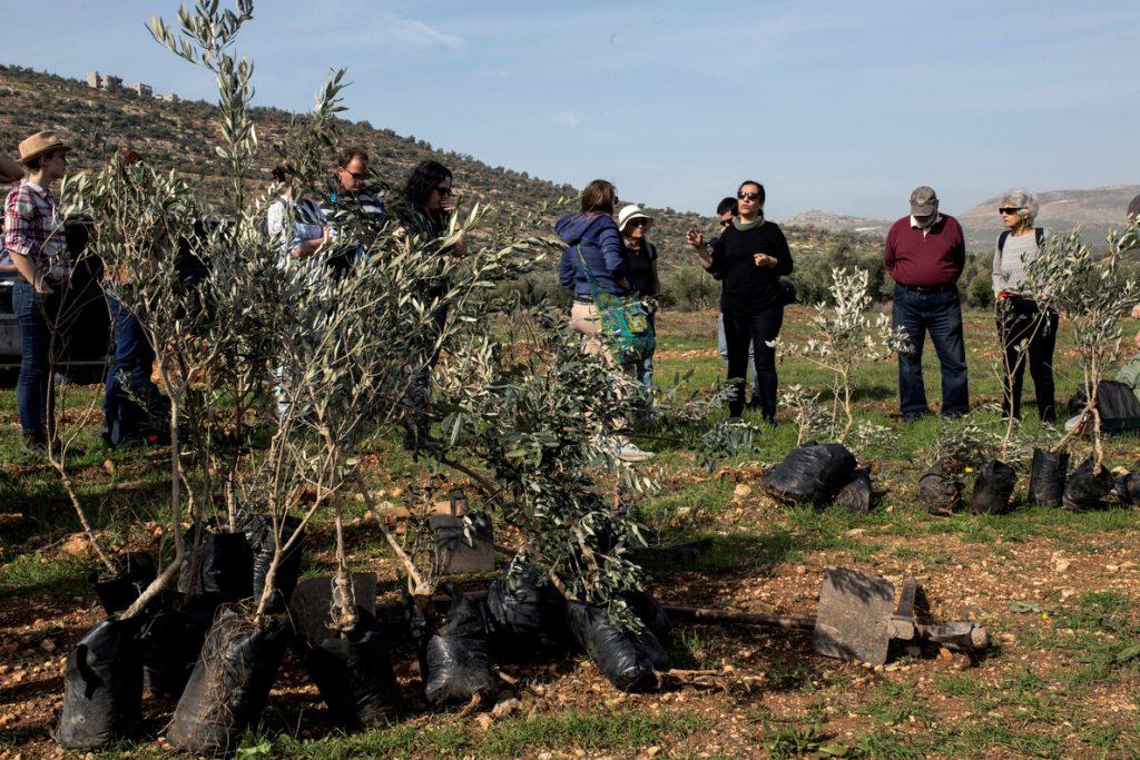 La fiesta judía de Tu Bishvat en Cisjordania, plantar árboles por la paz