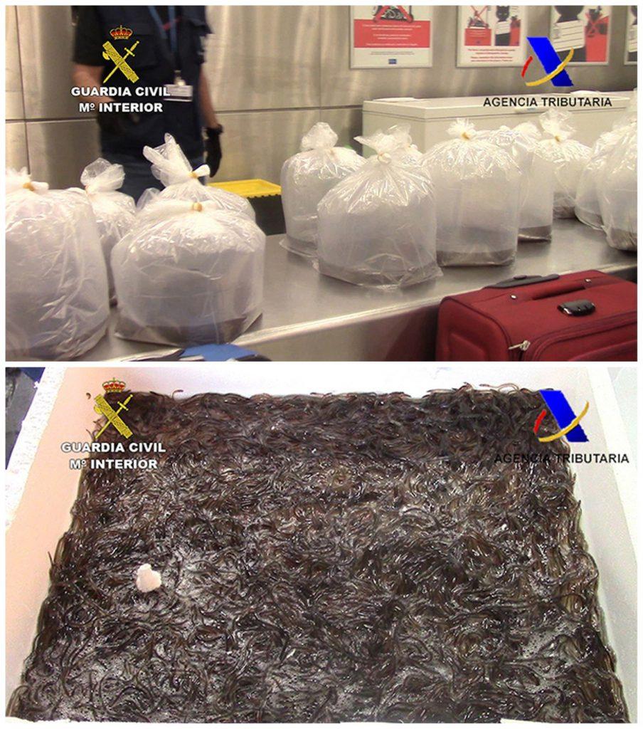Interceptados más de 300 kilos de angulas en el aeropuerto de Barajas