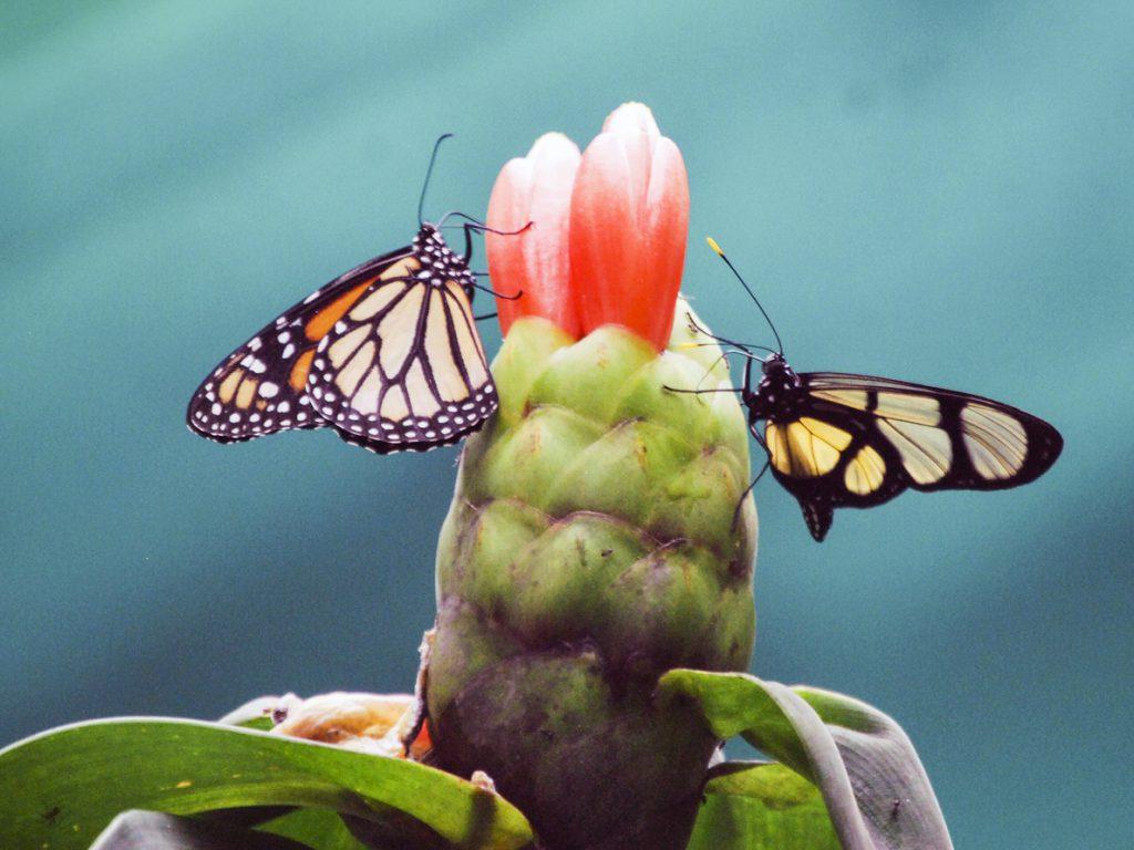 Un santuario de mariposas para frenar la deforestación en Perú