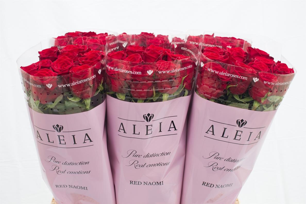 Aleia Roses se sitúa como el mayor exportador de rosas de España tras vender 24 millones en 2017