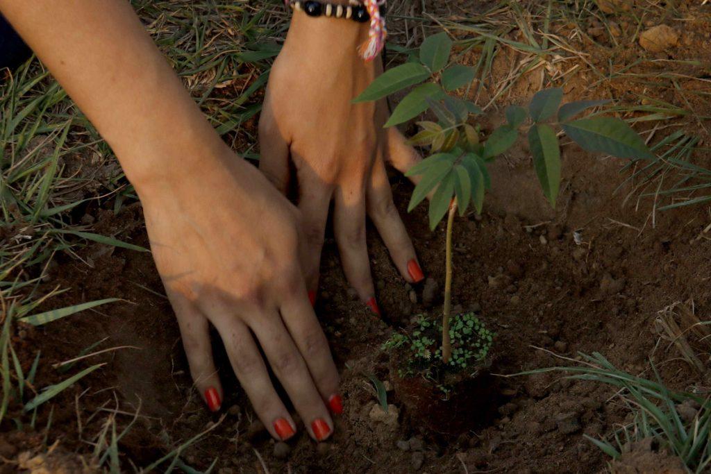 Plantar árboles para «conservar» agua, clave de un proyecto pionero en Brasil