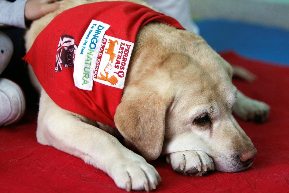 Leer con perros, una terapia innovadora para niños con necesidades especiales