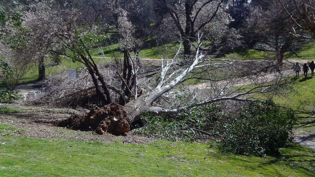 Cerrado El Retiro ante la posibilidad de caída de árboles y ramas por viento
