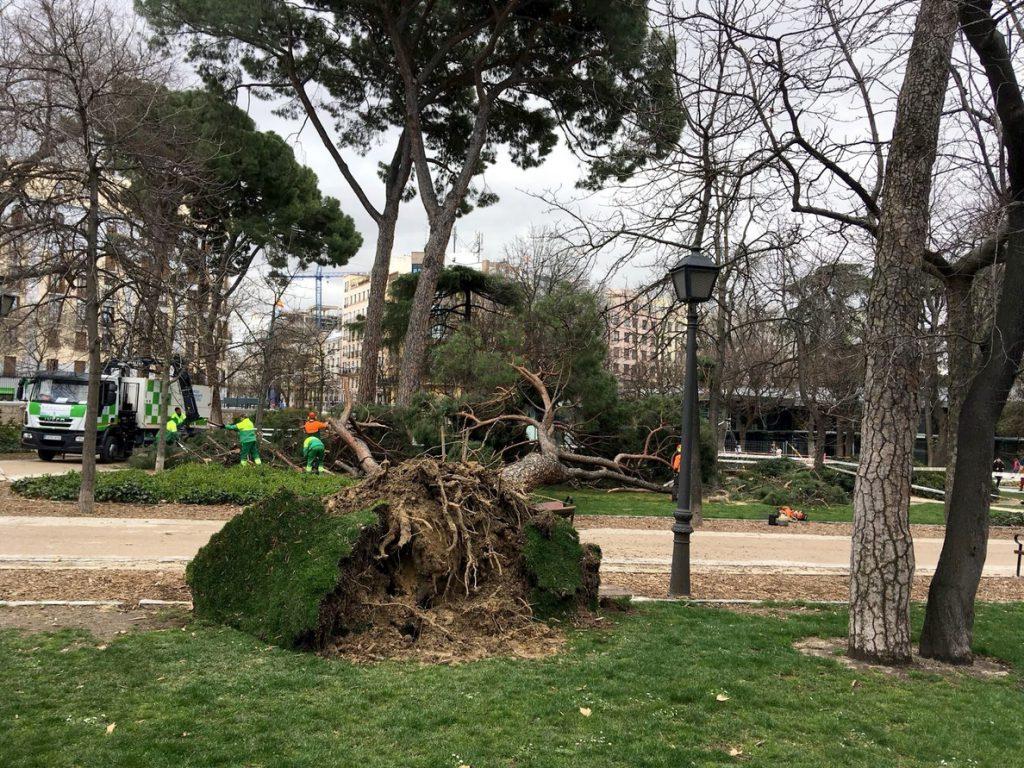 Bomberos de Madrid retiran casi 140 ramas y árboles desde la mañana de ayer