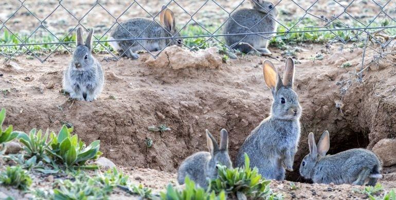 Más de 842.000 hectáreas y 166 municipios de Valencia están en «riesgo» de daños por sobrepoblación de fauna salvaje