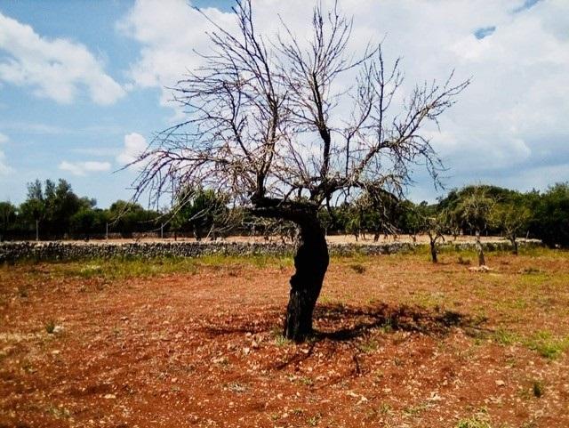 Cabanas (Agricultura) afirma que el ministerio ha buscado la «máxima eficacia» en los Presupuestos