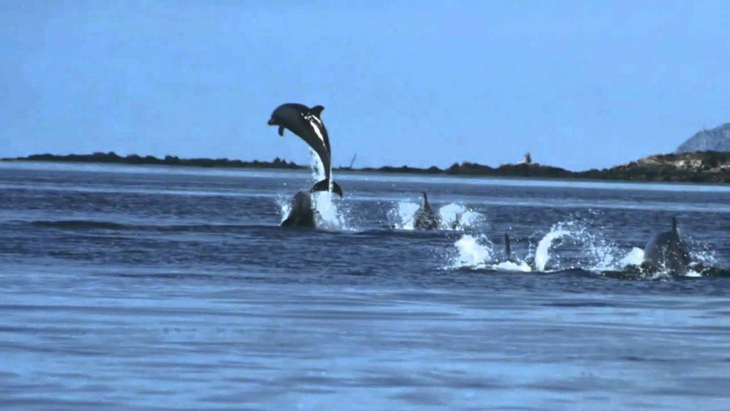 Avistan una espectacular manada de más de 3.000 delfines atravesando las Rías Baixas de Galicia