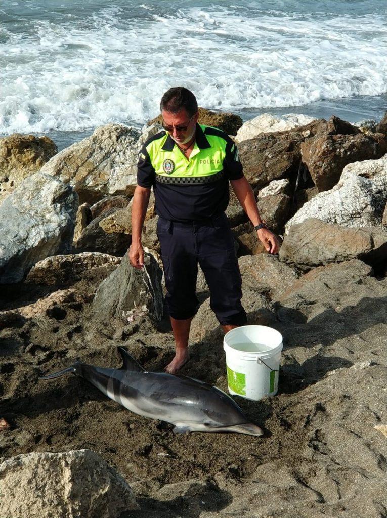 Rescatan a una cría de delfín varada en la playa de Chilches en Vélez-Málaga