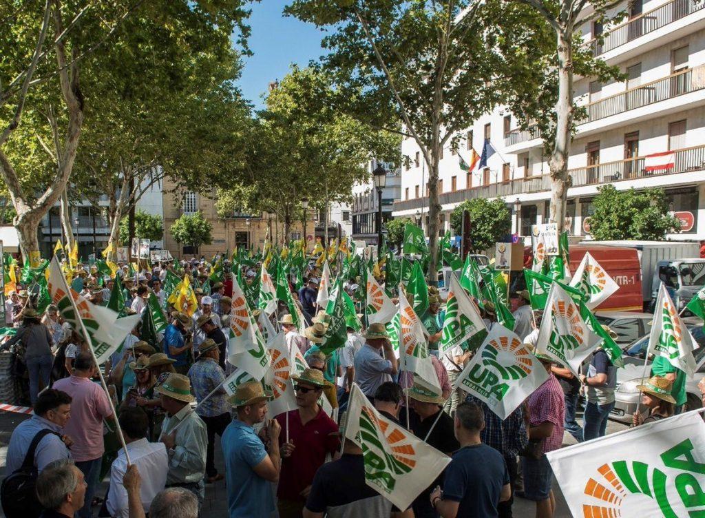 Bruselas estudia llevar los aranceles de EEUU a la aceituna negra ante la OMC y buscar nuevos mercados