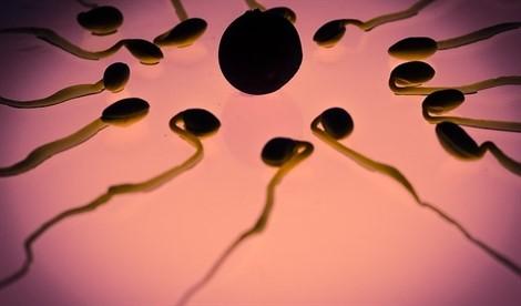 Un análisis del ADN, liberado en sangre y semen, permitirá determinar anomalías en los espermatozoides