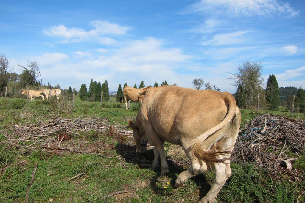 Agricultura hace informe favorable sobre nuevas extensiones de norma del sector lácteo y de carne de vacuno