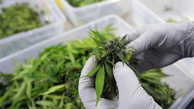 Casi la mitad de los españoles está a favor de legalizar la venta de marihuana