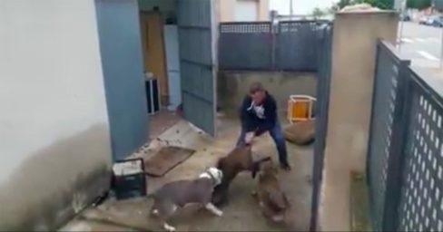 Fiscalía abre investigación penal por maltrato animal contra el hombre que azuzó a perros para que atacaran a un jabalí