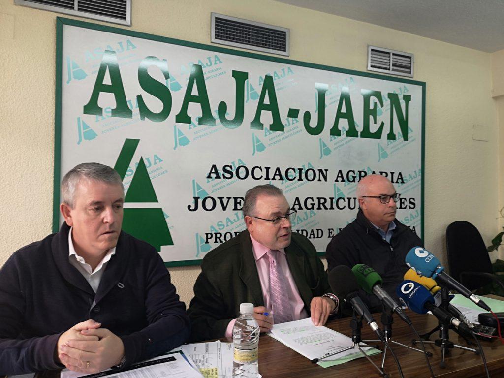Asaja señala el descenso del precio del aceite de oliva y pide mecanismos de autorregulación