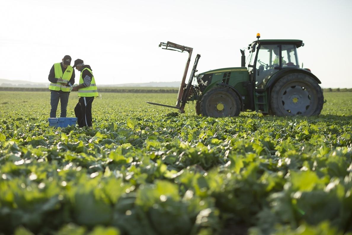 Florette invierte más de tres millones de euros para digitalizar sus técnicas de cultivo