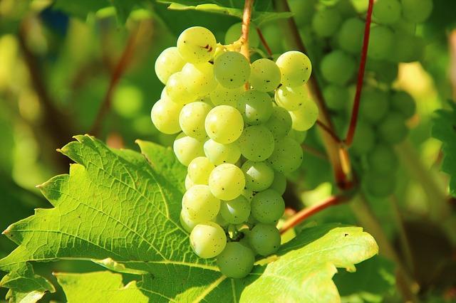 Ruta del vino Utiel-Requena: una gran oportunidad para conocer