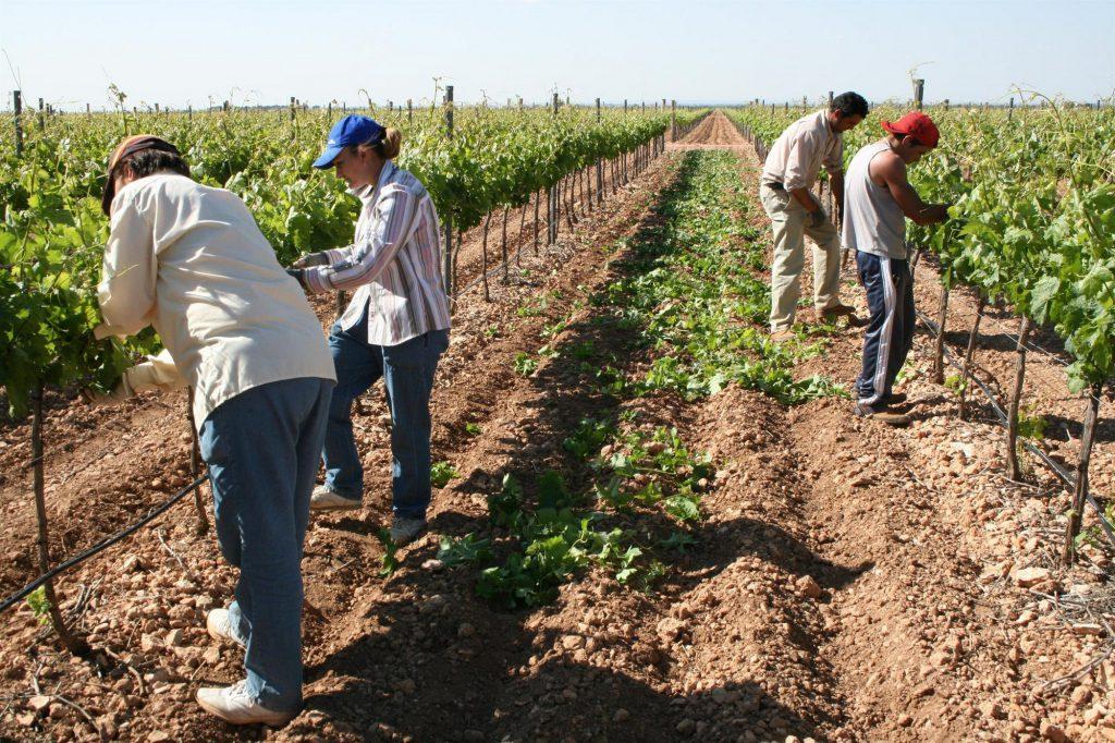 UPA califica 2019 como 'annus horribilis' para la agricultura y la ganadería familiar en España