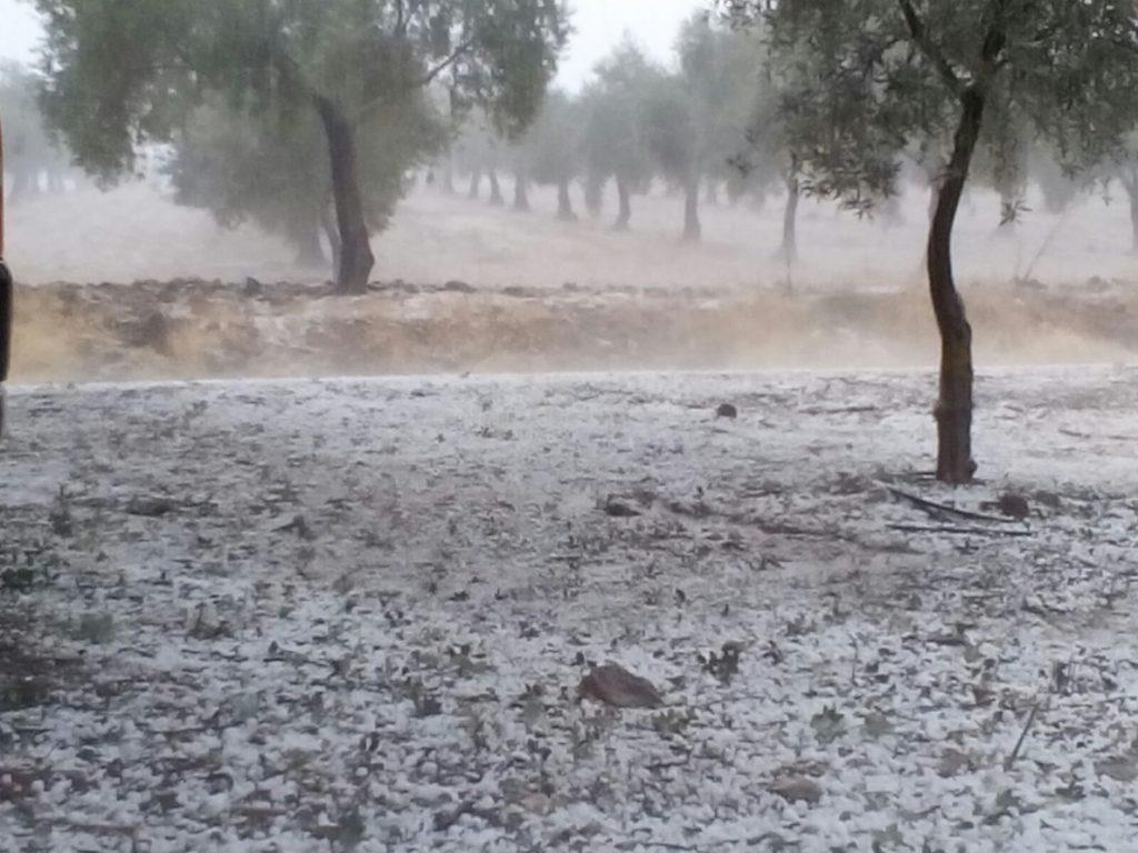 Australia alerta de «tormentas severas» con riesgo de inundaciones en zonas afectadas por los incendios