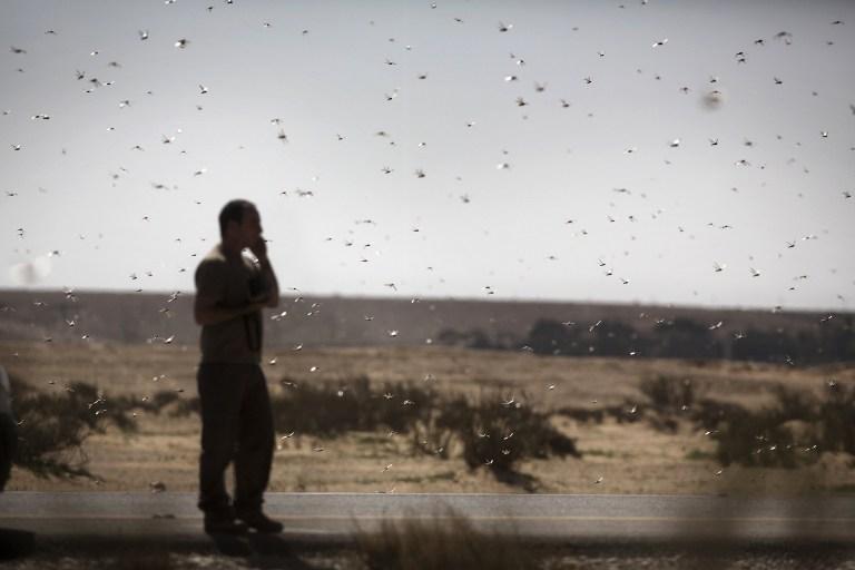 Nuevos enjambres de langostas amenazan el inicio de las cosechas en África Oriental